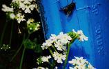 圖蟲風光攝影:鳶尾