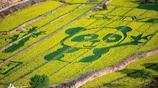 慶陽蒲河川油菜花節,獨特的地貌特點,鑄就董志塬上最美花海