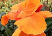 又到6月賞花季,三明有這麼多繽紛花海等你去一飽眼福!