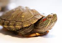 龜有傳染病嗎?