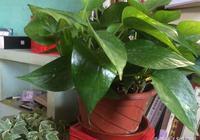 用這些水來澆花,保證植物越來越生機,不發黃還不長蟲,減少甲醛居家必備