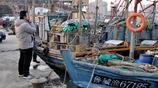 週末 市民扎堆碼頭 蠣蝦15元一斤 小雜魚按袋出售 熬湯裹餅子好吃