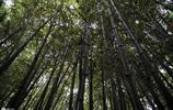 竹林的深處