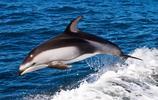 活潑可愛清新海豚