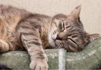 養貓的注意了,貓咪上床睡,真的好麼?