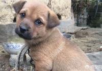 子女從父母家單獨出來住並領走父母一直餵養的狗,狗會覺得被拋棄了嗎?每個家人都熟?