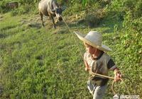 農村孩子過週日除了在家玩手機,還能讓他們幹什麼?