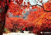 全廣州冬天最美的10個地方!