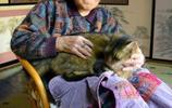 鏡頭下:日本貓咪當信使,這樣的生活讓很多人嚮往