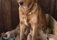 小奶狗:有的時候我真懷疑我不是我媽親生的……