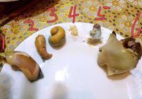 海螺怎麼吃
