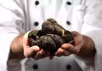 全世界最昂貴的16種食材,你見過嗎?