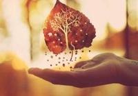 日子,越過越簡單;心境,越來越無塵