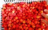 城裡50元1斤都買不到的野草莓,這裡遍山都是!