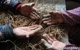 農村裡留守大娘撿藥材,一天能掙50元左右,看她們的手成啥樣子
