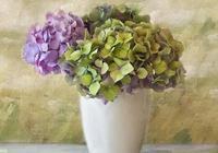 樹蔭下的浪漫——繡球花