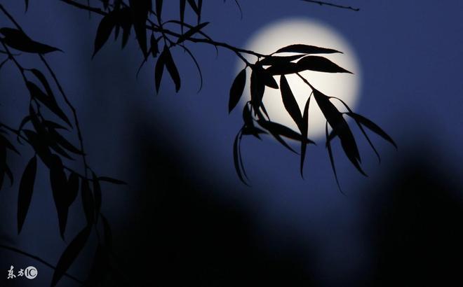 賞月賞人賞中秋,十五的月亮十六圓