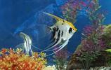 養魚來美化家居,更加容易催財運,你養對了嗎?