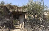 85歲農村老人獨居崖邊窯洞,院裡梨花飄香,身體硬朗生活愜意自在