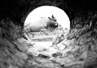 此物是中國最重文物之一,浸泡黃河水上千年,挖出時沒有一絲損壞