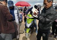 狗市:商販出售串串犬僅40元,可愛串串狗你喜歡嗎?
