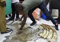 科特迪瓦查獲偷獵象牙獸皮