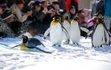 動物圖集:企鵝動物