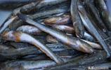 市場出售的這種魚15元一斤,它叫什麼名字?