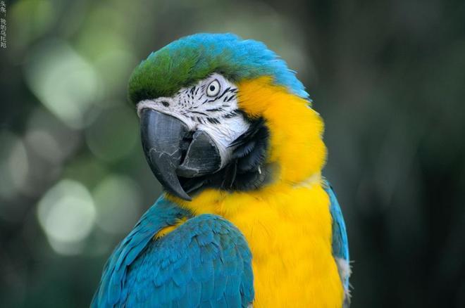 攝影欣賞——一組小鳥鸚鵡的攝影圖片