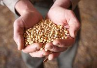 俄國大豆一噸多少錢,能取代美國大豆嗎?