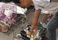 大爺賣小土狗50元一隻,網友一眼相中一隻小奶狗,直呼賺大發了