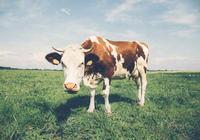 奶粉類目市場細分和羊奶粉的崛起