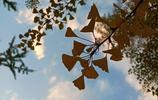 帶著金立M7拍初秋:背景虛化完美,這拍照效果我服!