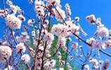 杏花疏影中,吹笛到天明