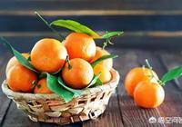 2018年柑橘行情怎麼樣?種植柑橘還能掙錢嗎?