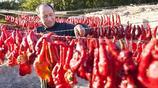 乾製辣椒產量佔據全國1/5的新疆,與內地辣椒產區有區別