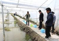 作為一個養殖小龍蝦的新手,通常會遇到的問題有什麼?