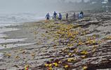 有些人靠著海上飄來的垃圾發了家,看到最後一張真的落淚了