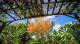 斐濟,一個作家筆下適合愛情的國家