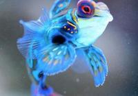 青蛙魚是魚和青蛙的雜交嗎?