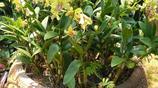 蘭花園的老花匠說,養蘭還得這麼配盆,加一物花開爆