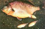 黃海里面釣上來胎生的怪魚