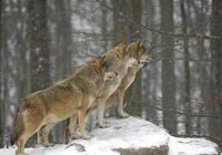 與狼成狼,與豬成豬!