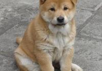 除了貓狗,其他動物都是白眼狼,對它再好也白搭