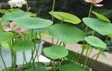 無論房子租或買,生活是自己的,這6種盆栽要有,滿屋飄香還健康