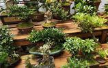逛逛天津曹莊花卉市場,這植物也太全了,全想搬回家