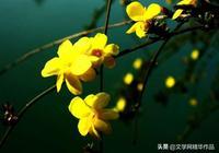 七絕  題迎春花