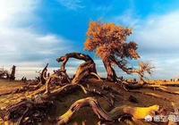 頭條的朋友們,塔克拉瑪干沙漠可以完全綠化嗎?