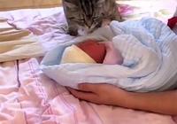 寶寶出生後剛回家,家裡養的貓湊過來伸出爪子後,網友炸鍋了!