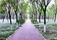 北京溫榆河綠道朝陽段比較隱蔽,屬於郊野型綠道很適合騎行